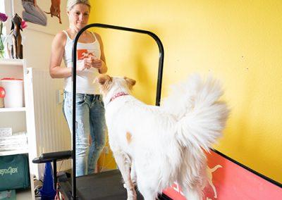 Sabine Eichhorn Krankengymnastik Tiere